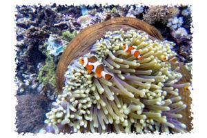 Cruising Indonesia – Flores and The Komodo Islands