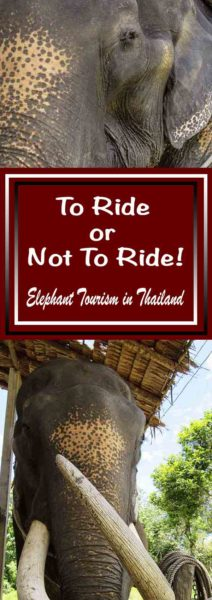 To Ride or Not To Ride - Elephant Tourism in Thailand