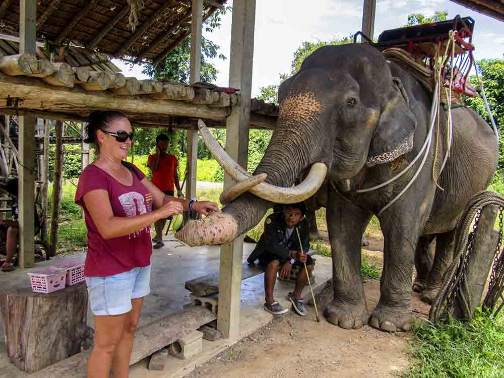 To ride or not to ride? Elephant Tourism in Thailand.