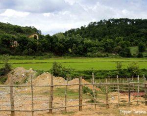 Green rice paddy Laos